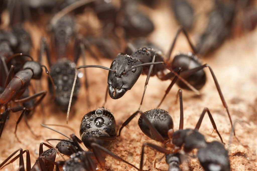 Termites vs. Carpenter Ants