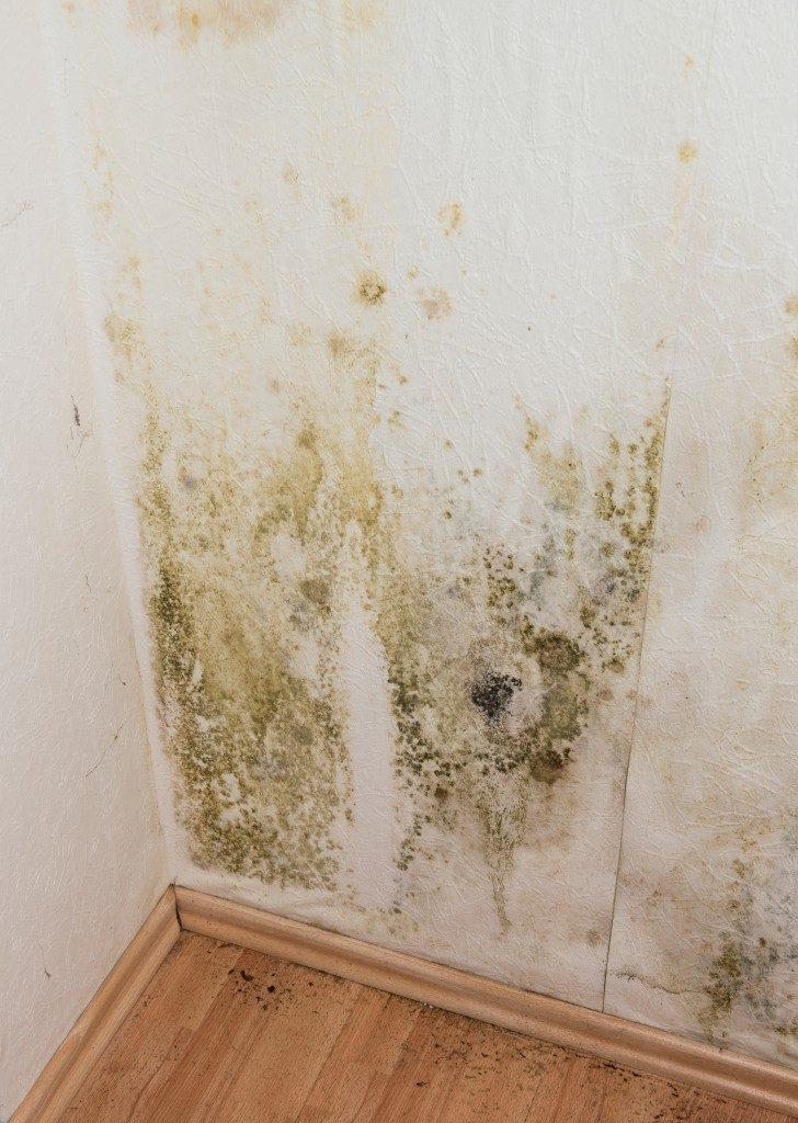 mold in an old house