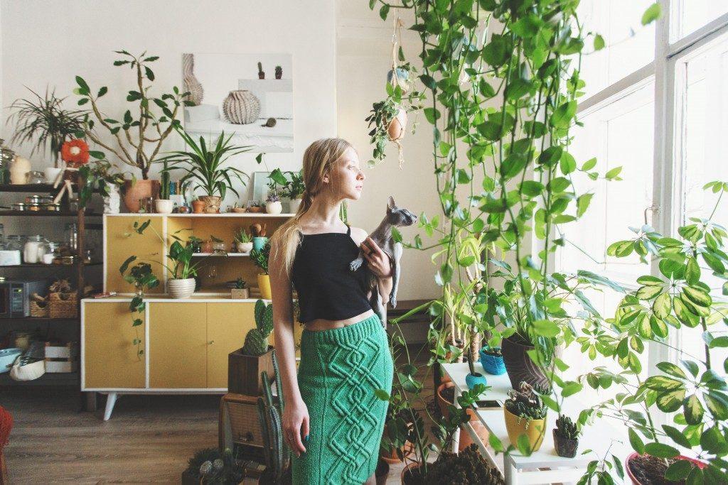 Plants inside a home