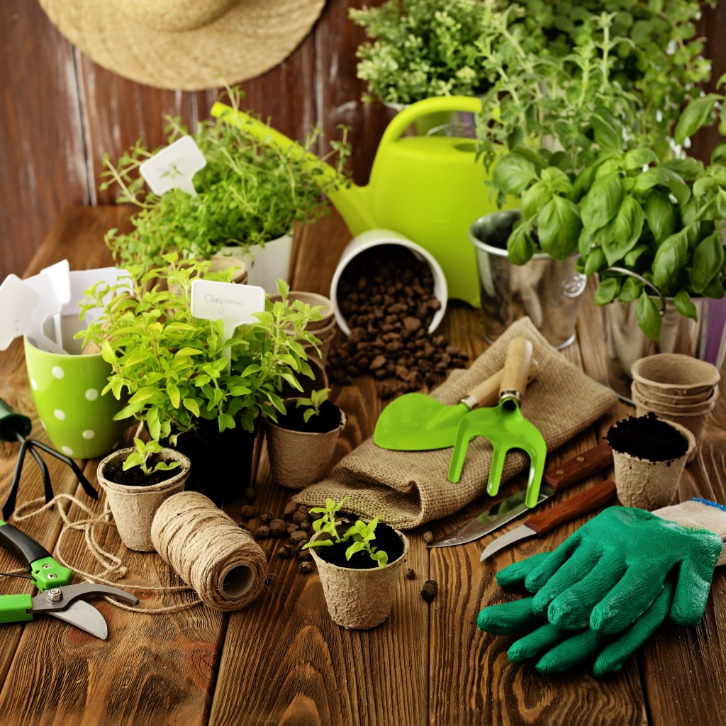 potted plants and gardening materials
