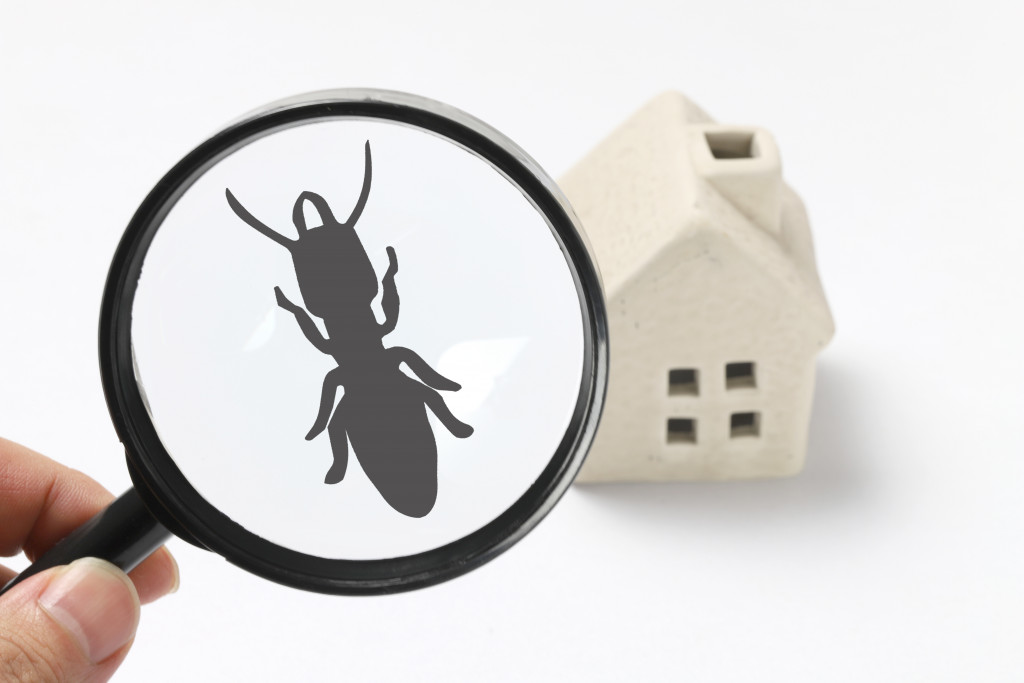 house pests